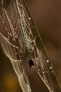 A spider building a web, outdoors.