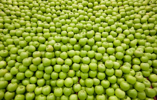 A large pile of thousands of green apples